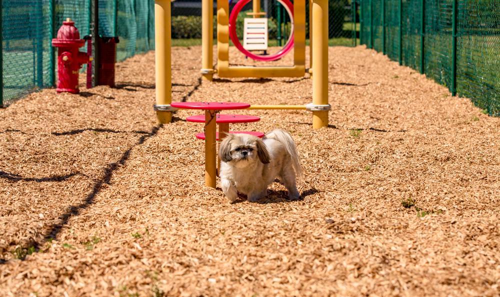 Pet Playground at Arbors at Orange Park in Orange Park, FL