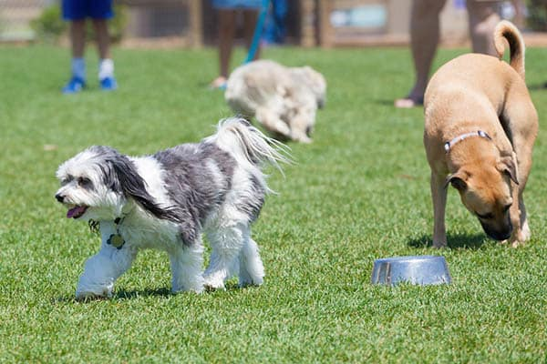 Expansive dog park at Spyglass