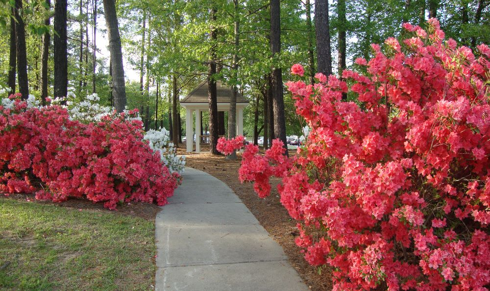 azaleas walking path at The Columbia Presbyterian Community in Lexington, SC