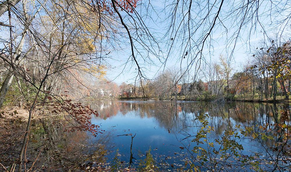 Pond At Briar Knoll