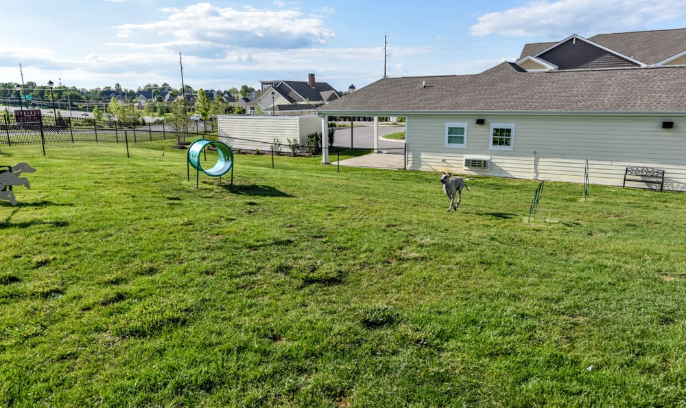 Pet Playground at Springs at Liberty Township Apartments in Liberty Township
