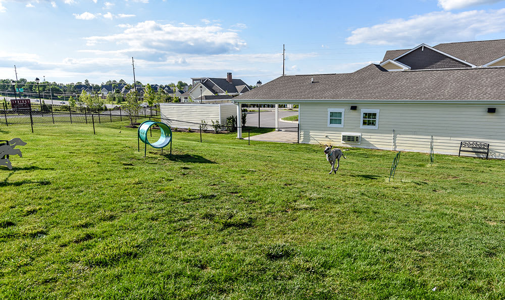 Your pets get their own playground at Springs at Sun Prairie