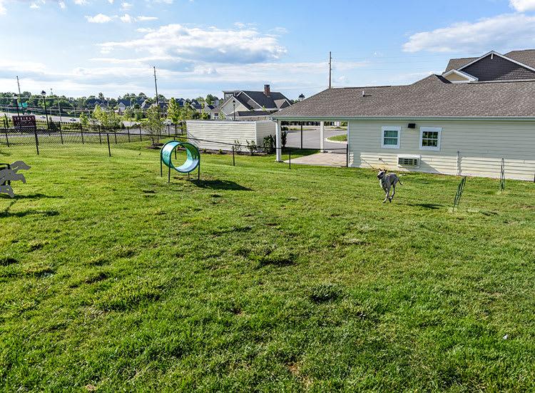 Pet playground at Springs at Sun Prairie