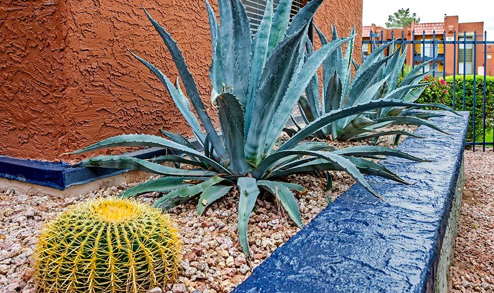 View of aloe and cactus in well-maintained landscaping at Villetta Apartments in Mesa