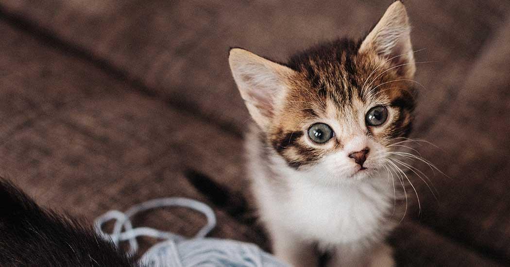 The Larkspur is cat friendly