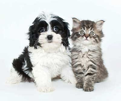 Kitten and puppy from The Nathaniel