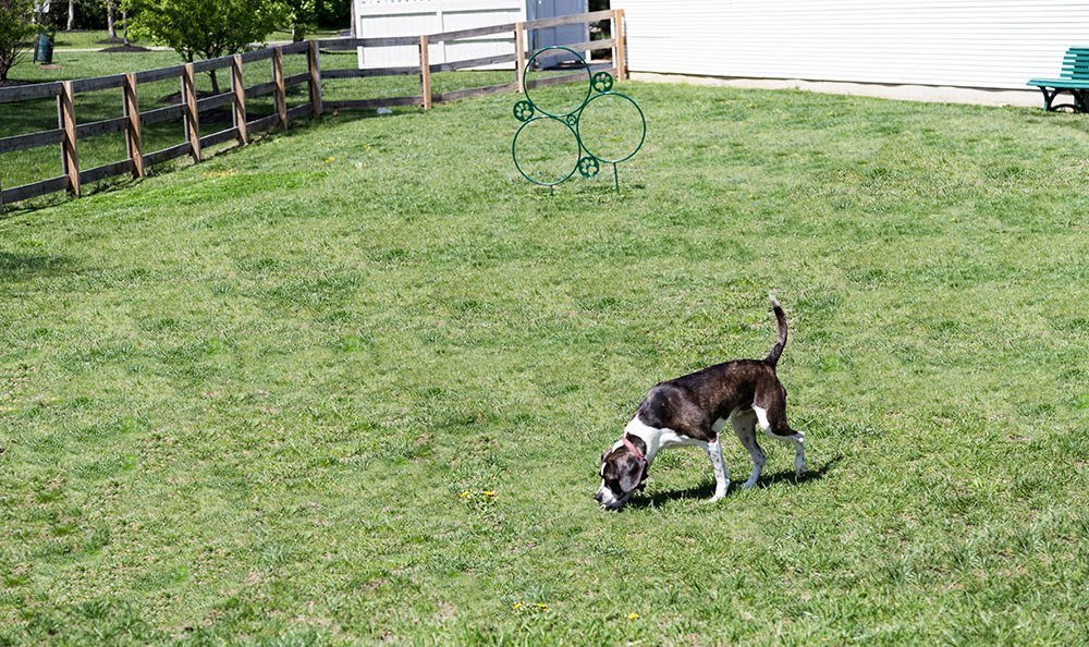 A dog park is on-site for your pet friend at The Preserve at Beckett Ridge