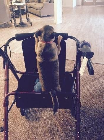 Pet friendly senior living community in Medford, OR