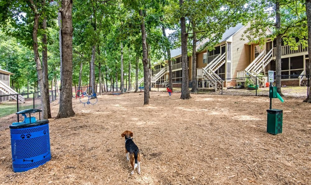 Dog park at Six Forks Station in Raleigh, NC