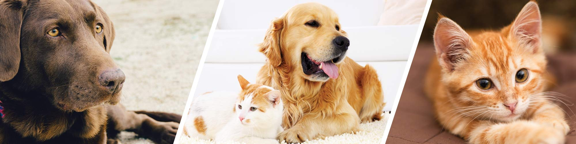 Pet friendly apartments at VIA