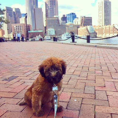 Seaport District Pet Friendly Apartments For Rent Near