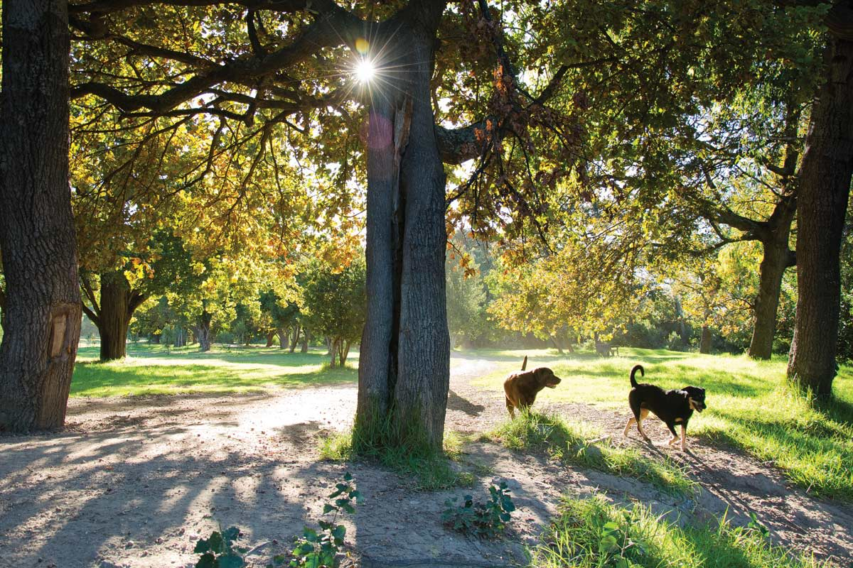 Dog parks nearby at VIA