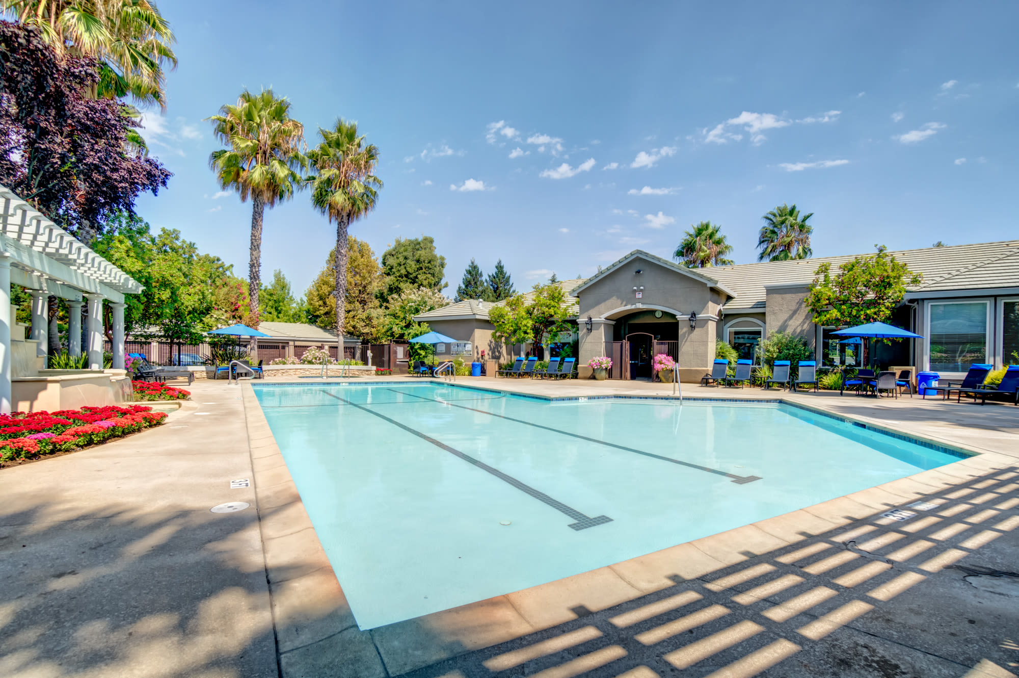 Pool view with palm trees and lounges in Napa, CA