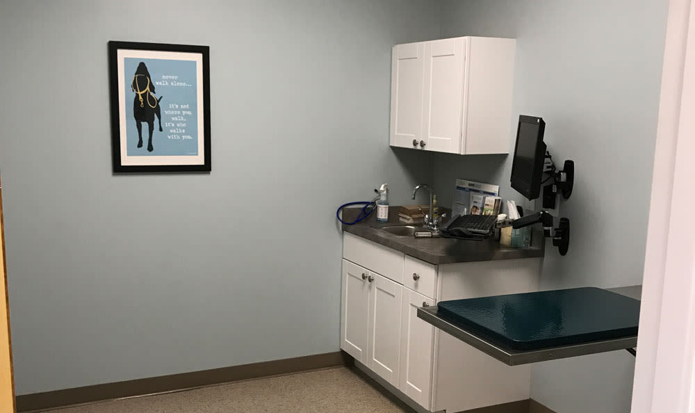 Macedon Veterinary Care exam room in Macedon