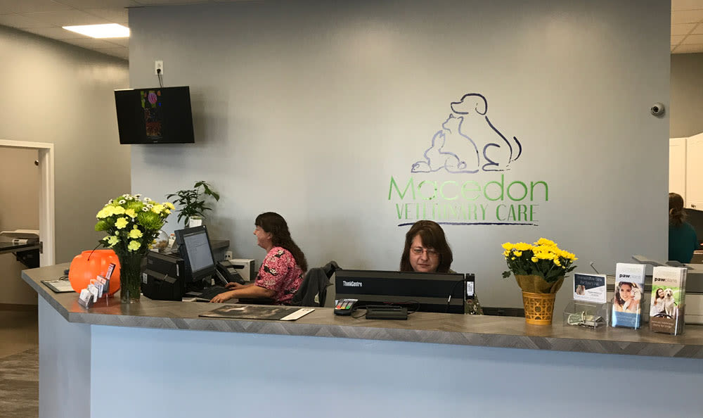 Macedon Veterinary Care lobby in Macedon