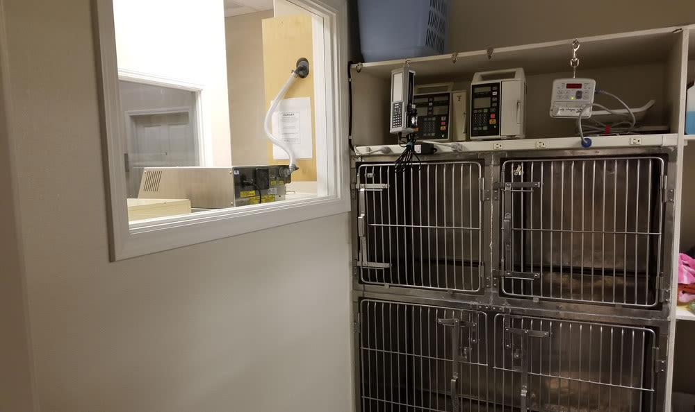 Isolation room at Arroyo Grande Animal Hospital
