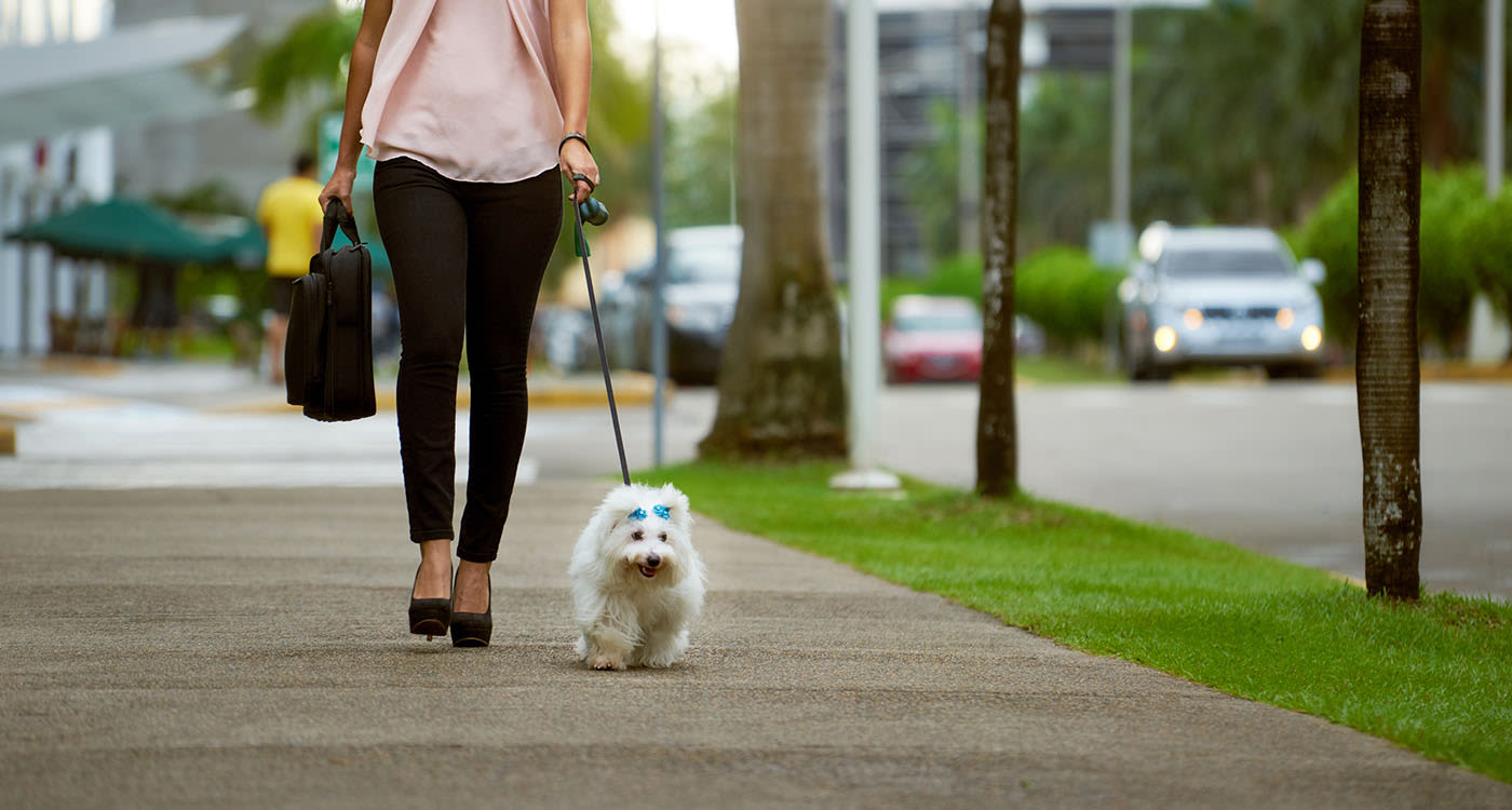 Resident walking a dog near Alta Grande in Orlando, Florida