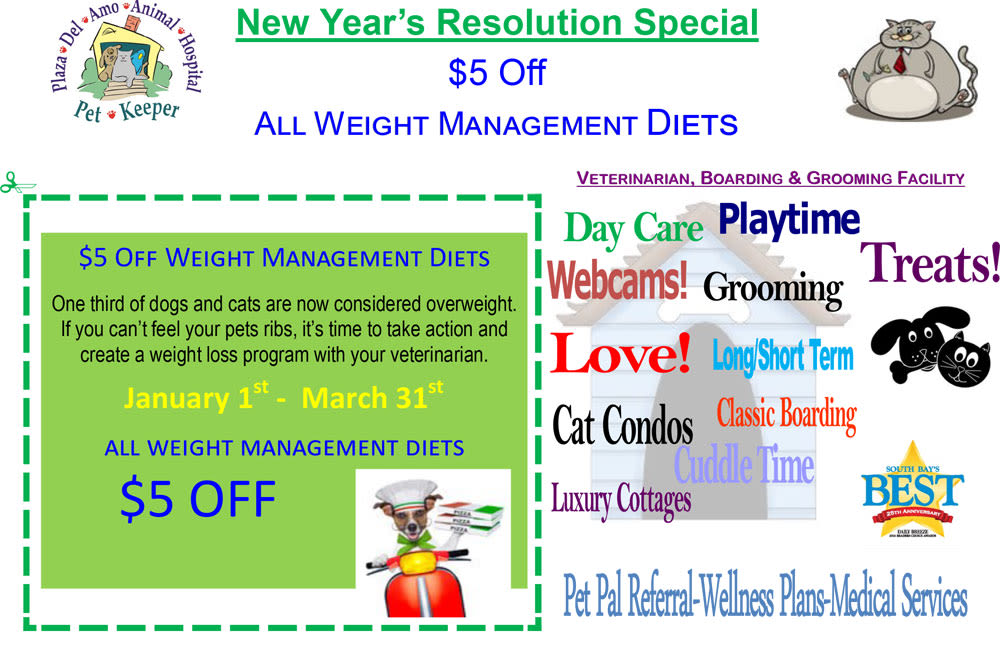 Weight Management Diet Special at Plaza Del Amo Animal Hospital & Pet Keeper