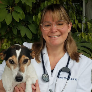 Dr. Cotten at Pleasanton Animal Hospital