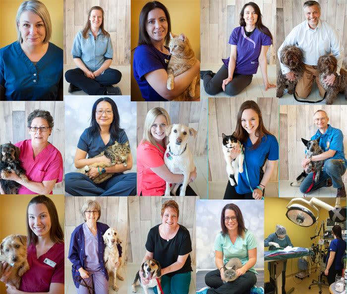 Our team at Okanagan Veterinary Hospital