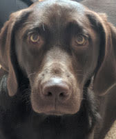 Elaine, Hospital Manager at Animal Crackers Veterinary Hospital