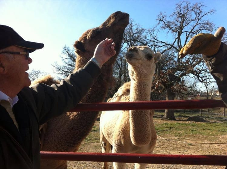 Dr Hertzog from Lee's Summit Animal Hospital with a camel