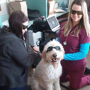 Dog receiving laser therapy at Lee's Summit Animal Hospital in Lee's Summit