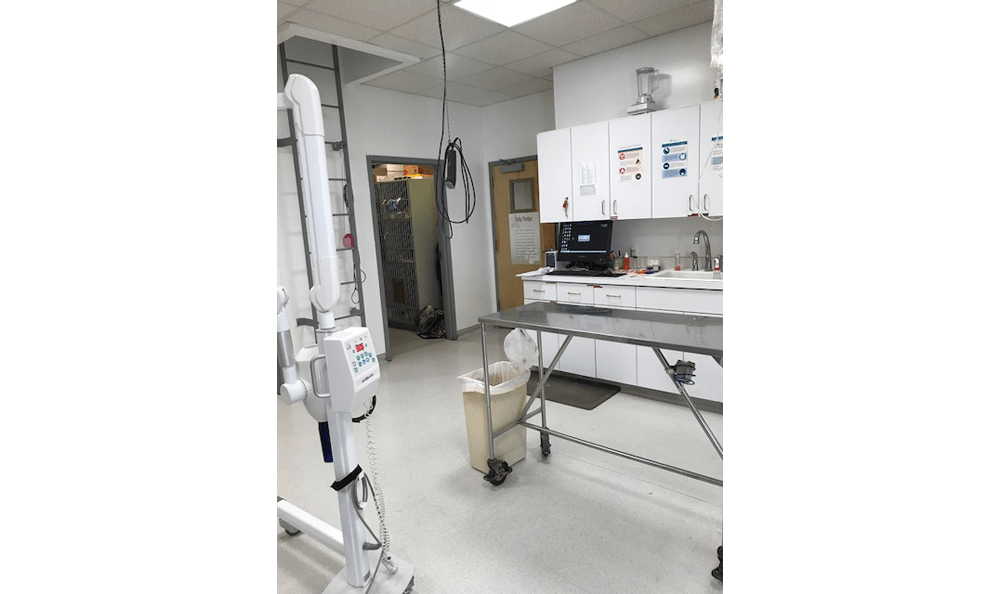 Treatment Room at Bolton Animal Hospital in Albuquerque