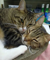 Linus and Tilly, Clinic Cats at Scenic Hills Animal Hospital