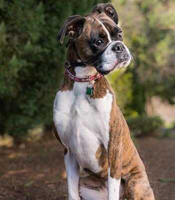 Lexi at Value Pet Clinic - Kent