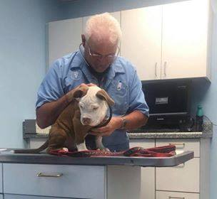 Puppy receives Wellness Exam at Lee's Summit Animal Hospital in Lee's Summit Animal Hospital