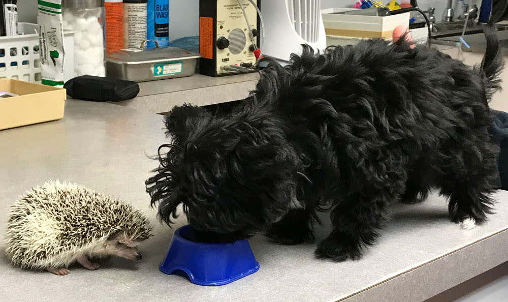 Hedgehog and Puppy at Elmwood Park Animal Hospital