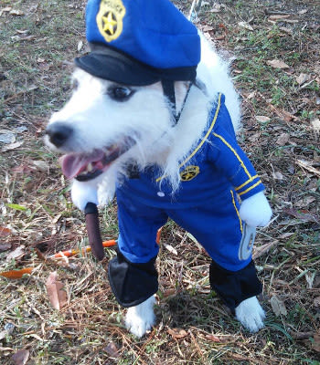 Cosplay dog at Alachua, FL