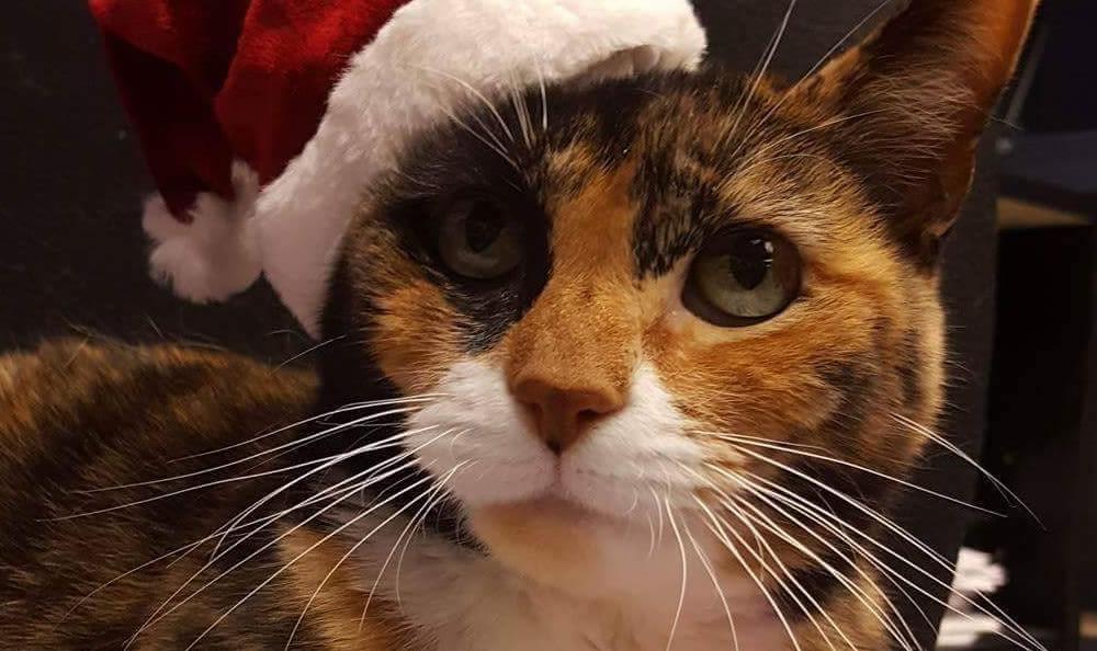 Holly At Lenoir Veterinary Hospital