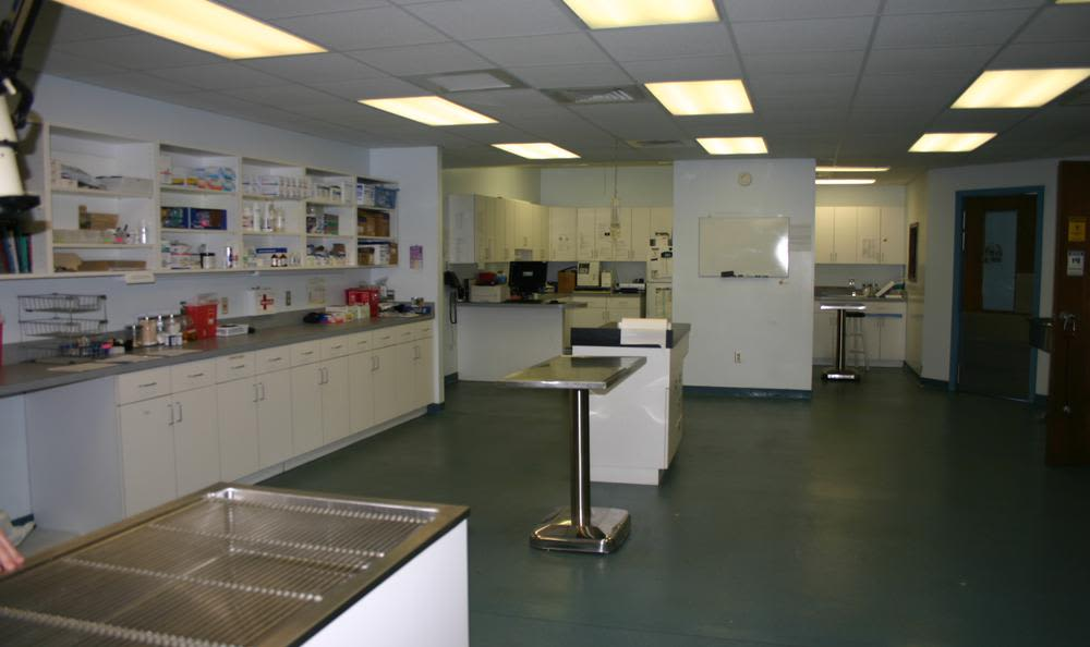 Treatment Area At Lenoir Veterinary Hospital
