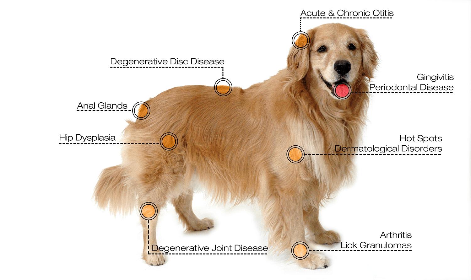 Laser therapy diagram at Owl Creek Veterinary Hospital