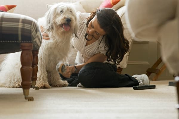 A shaggy dog and its owner enjoy time at home at Georgian Court Estates in Burlington