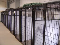 Indoor metal kennels at University Pet Resort in Merced, California