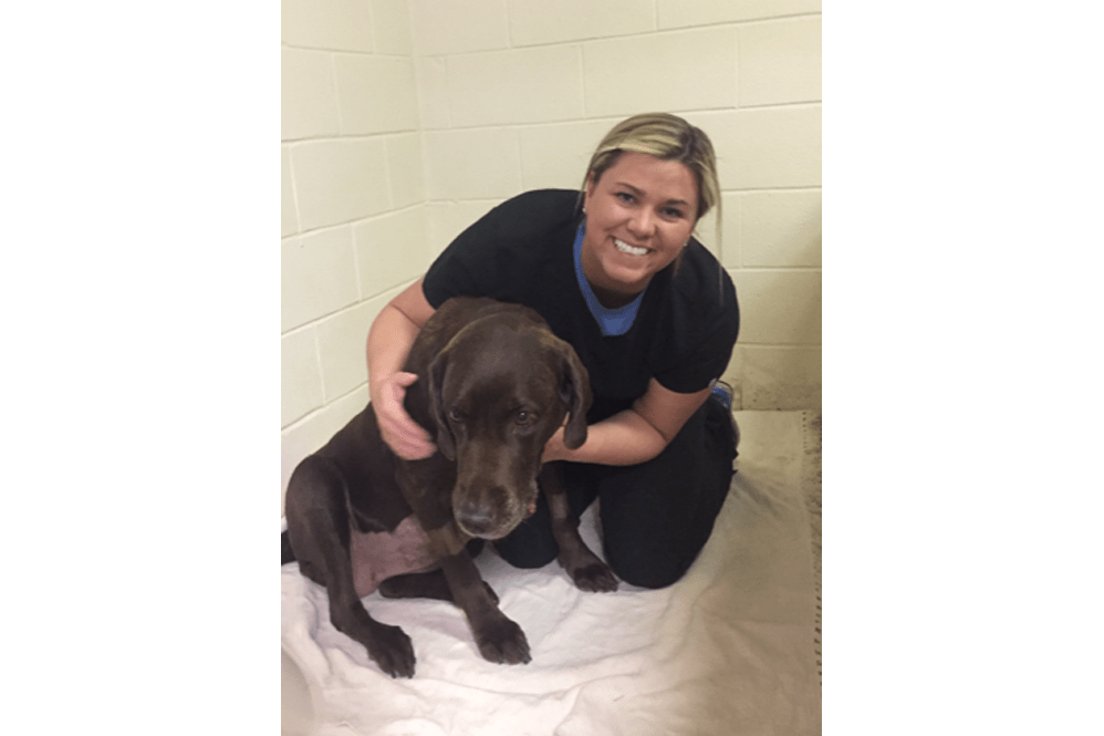Employee and dog at Oldtown Veterinary Hospital in Winston Salem