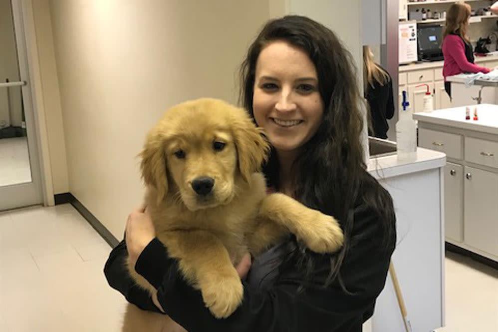 Golden retriever puppy at Oldtown Veterinary Hospital in Winston Salem