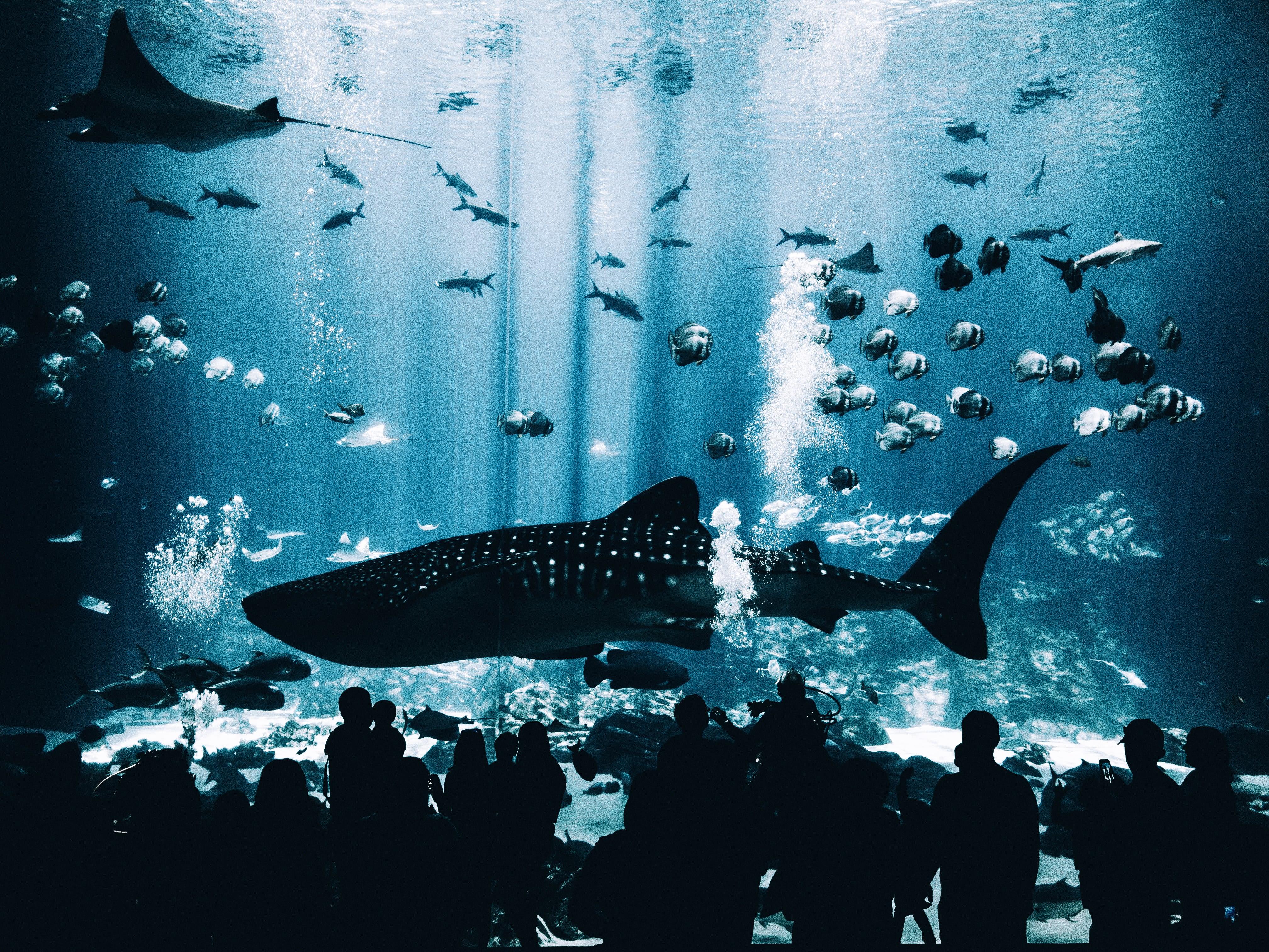 shark in aquarium with fish swimming around it
