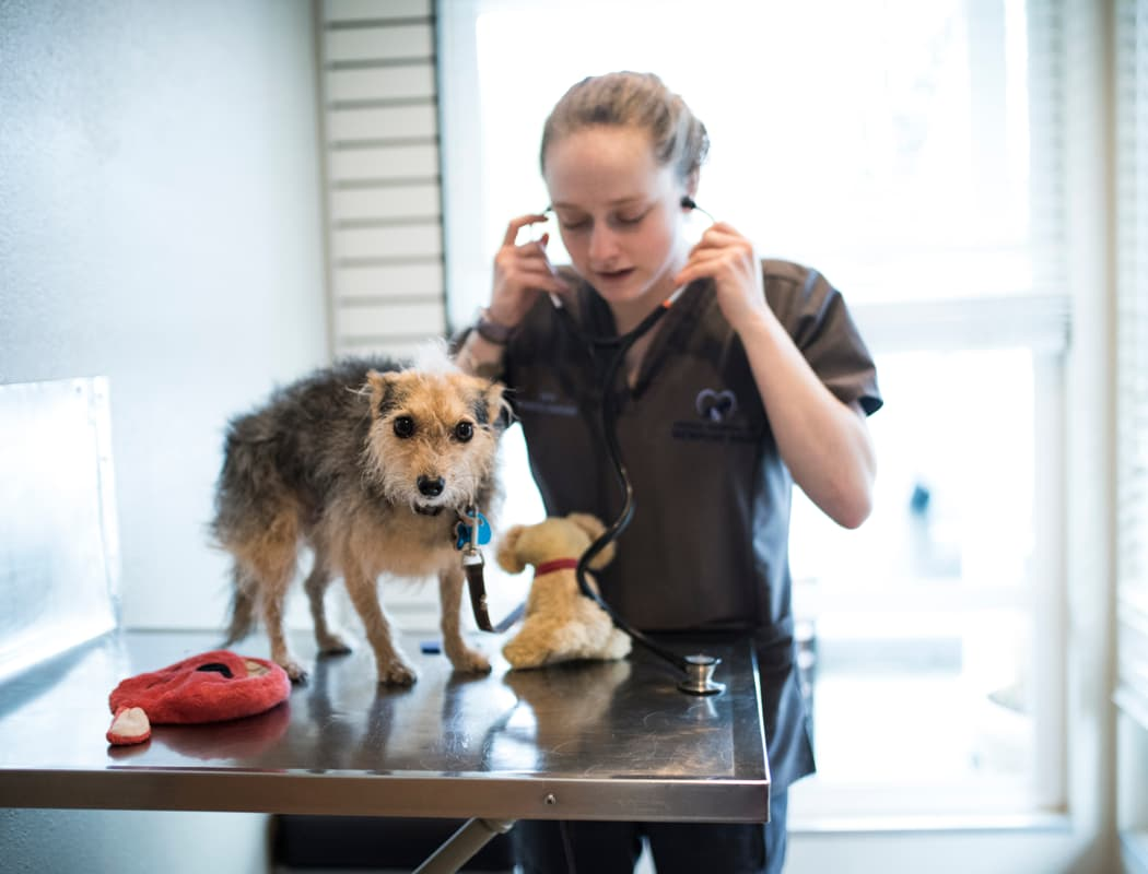 Various pet services offered at Newcastle Animal Hospital