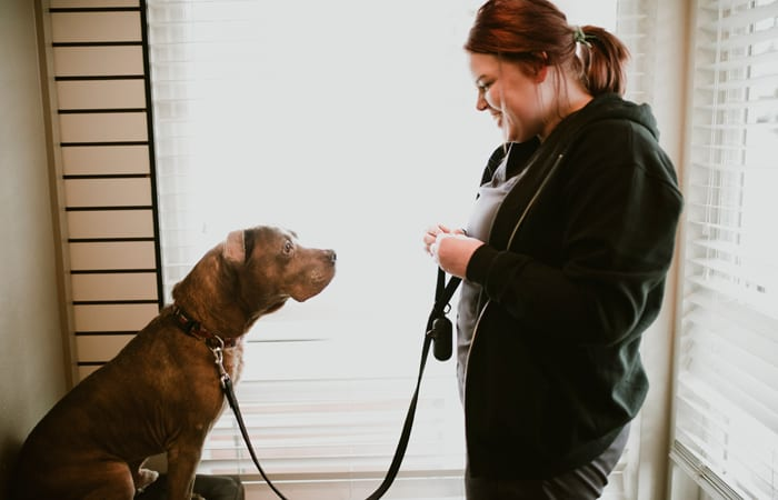 Obedience Counseling offered at Animal Hospital in Newcastle