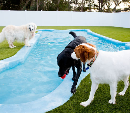 Dogs playing in the yard by the pool at St. Simons Island Animal Hospital