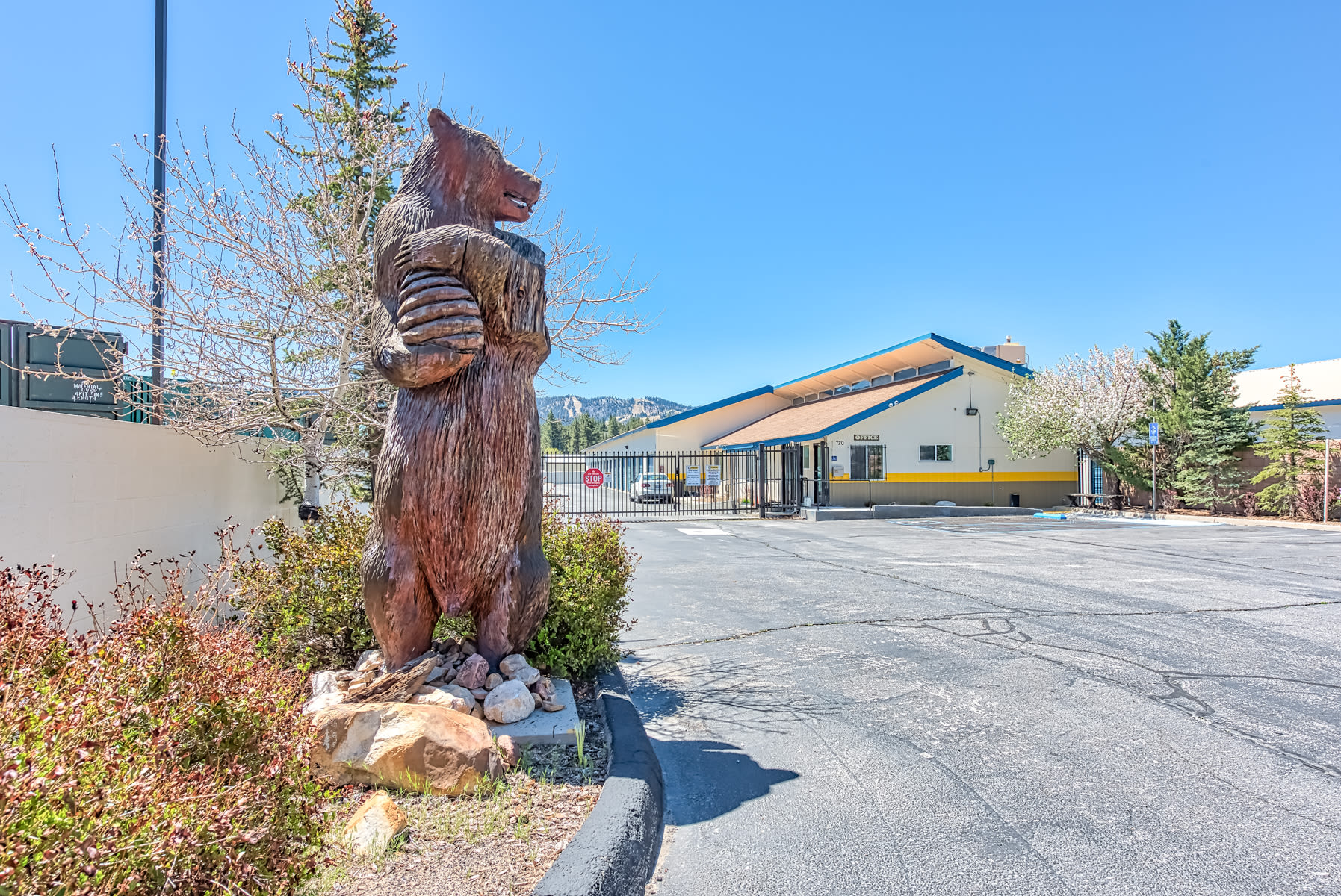 The bear at our storage facility in Big Bear Lakes