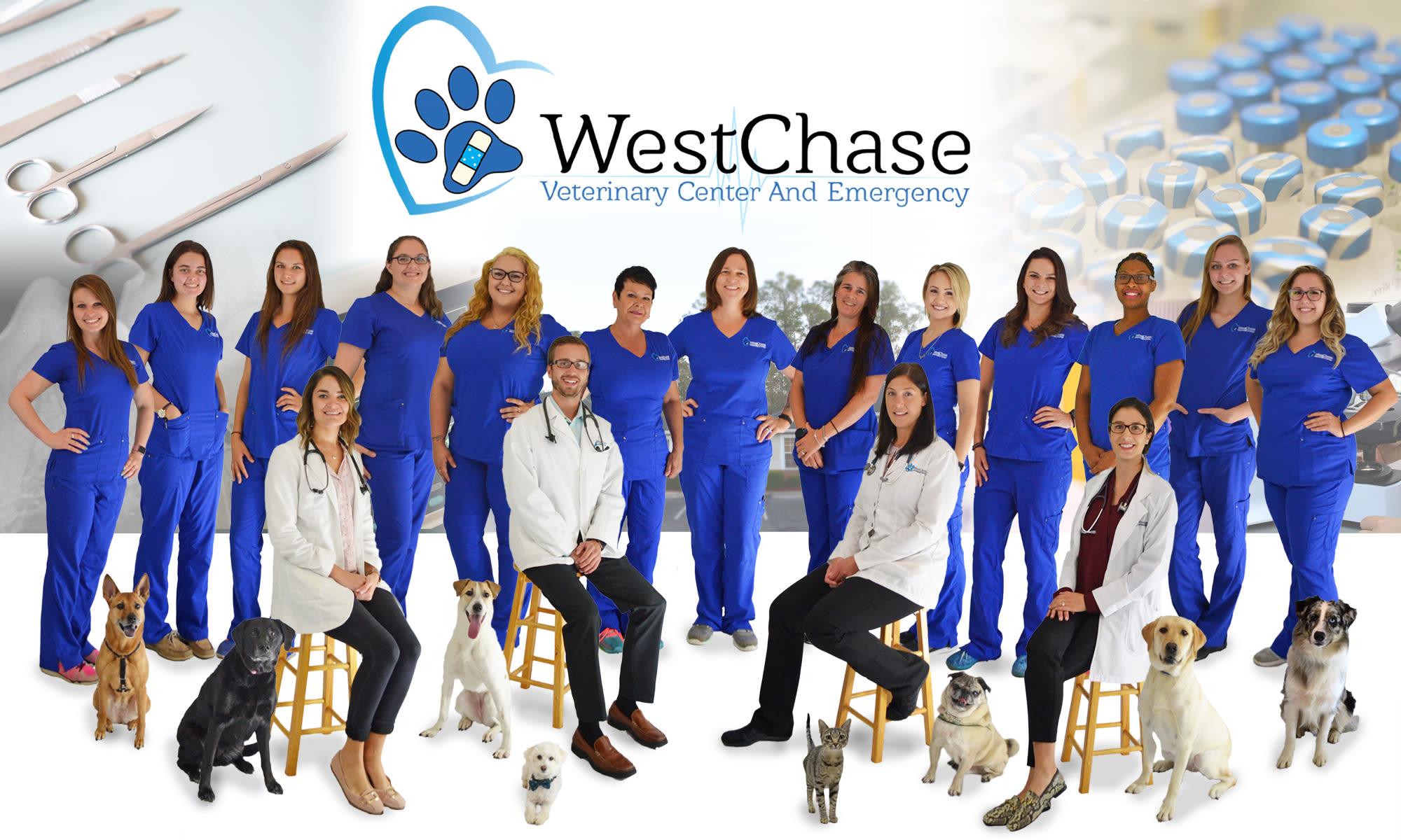 Animal Hospital in Tampa, FL