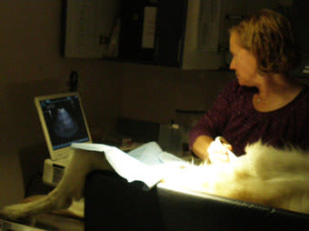 Ultrasound machine for pets at River Road Pet Clinic in Tucson, Arizona