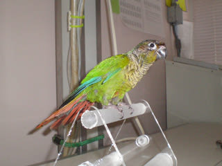 Bird pet at River Road Pet Clinic in Tucson, Arizona