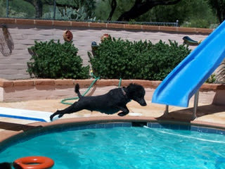Doggie in pool and recreation games at River Road Pet Clinic in Tucson, Arizona