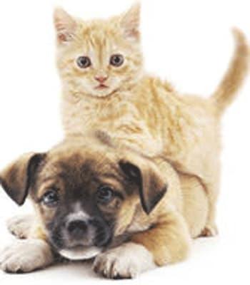 Kellye at Value Pet Clinic - Kent